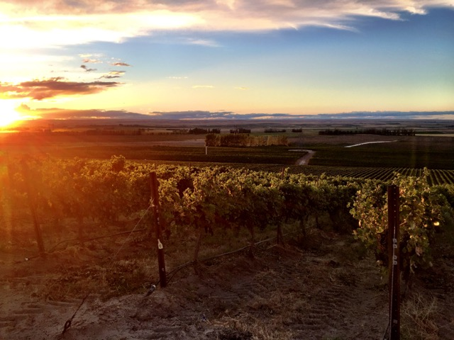 destiny ridge vineyard